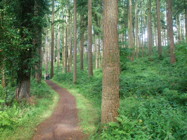 Our forests are an important natural resource